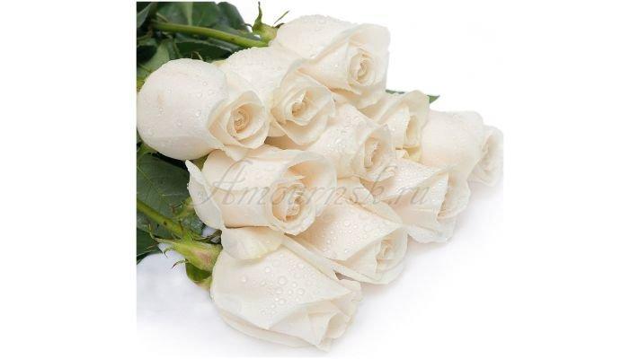 Роза [Венделла белая, 50 см.]
