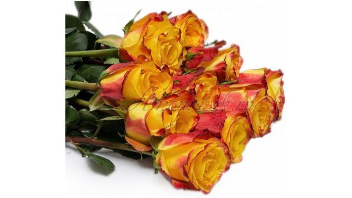 Роза [Хай Флейм красно-желтая, 50 см.]