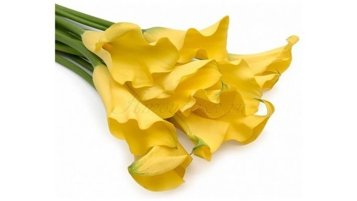 Каллы [желтые, 40 см.]
