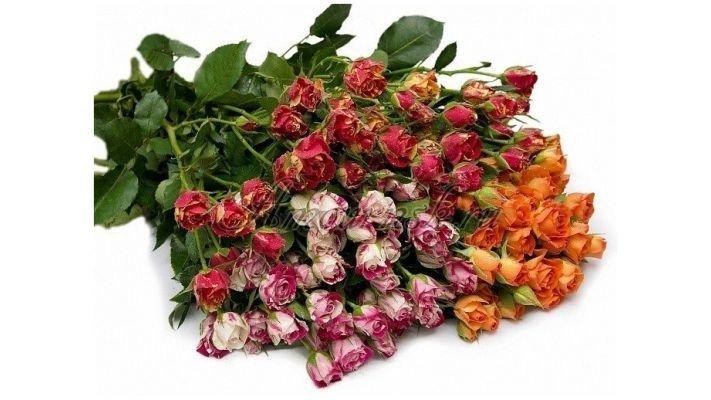 Роза [кустовая микс]